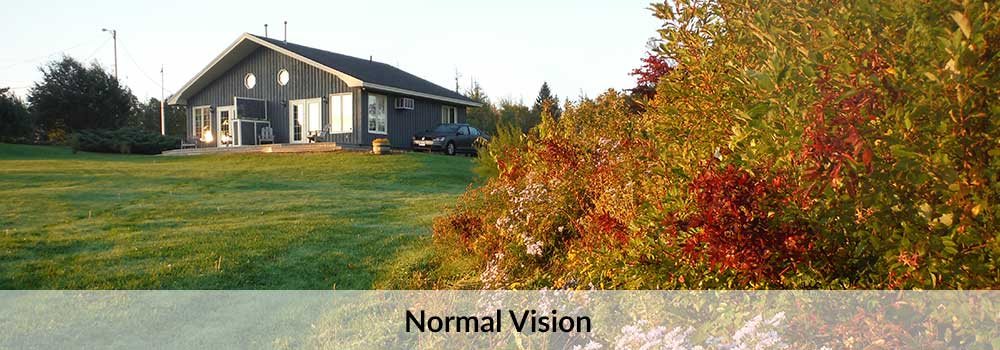 normal-vision